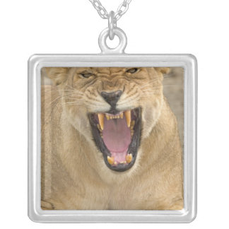 Lioness Snarl B, East Africa, Tanzania, Silver Plated Necklace