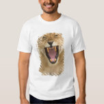 Lioness Snarl B, East Africa, Tanzania, Tees