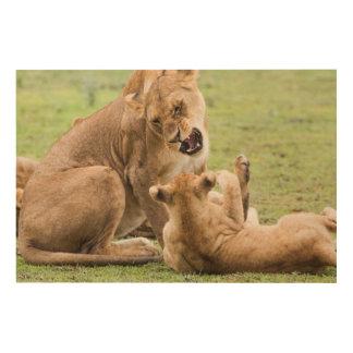 Lioness Snarls at Cub Wood Print