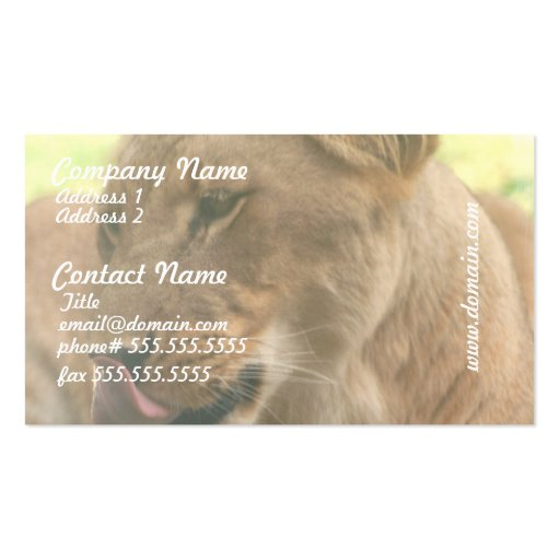 Lioness with Tongue Out Business Cards