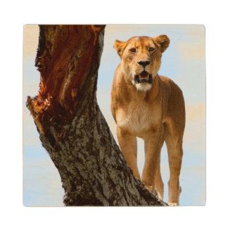 Lioness Wood Coaster