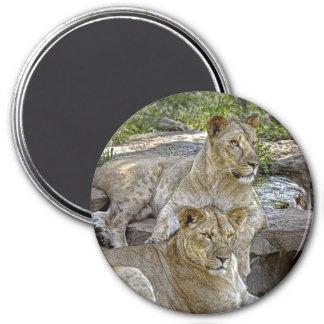 Lionesses Magnet