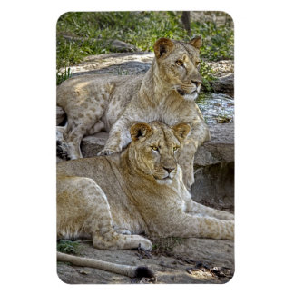 Lionesses Magnets