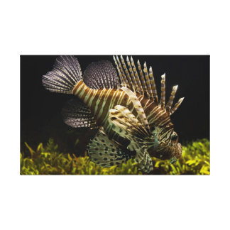 Lionfish canvas