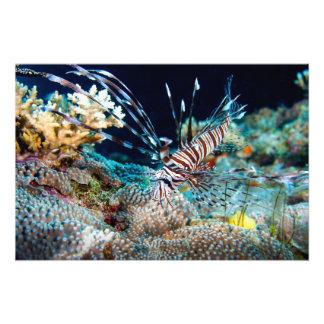 Lionfish Print Photographic Print