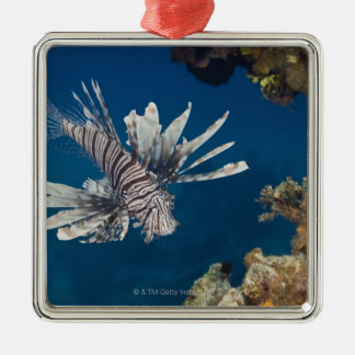 Lionfish (Pterois volitans) swimming over Silver-Colored Square Decoration
