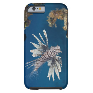 Lionfish (Pterois volitans) swimming over Tough iPhone 6 Case