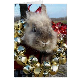Lionhead Bunny Christmas Greeting Card