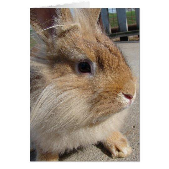 Lionhead Rabbit Card