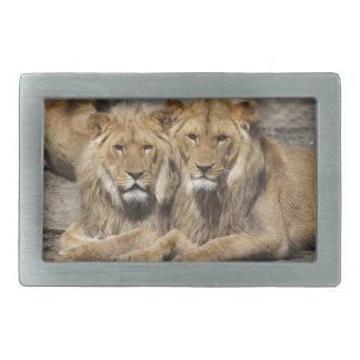 Lions Belt Buckle