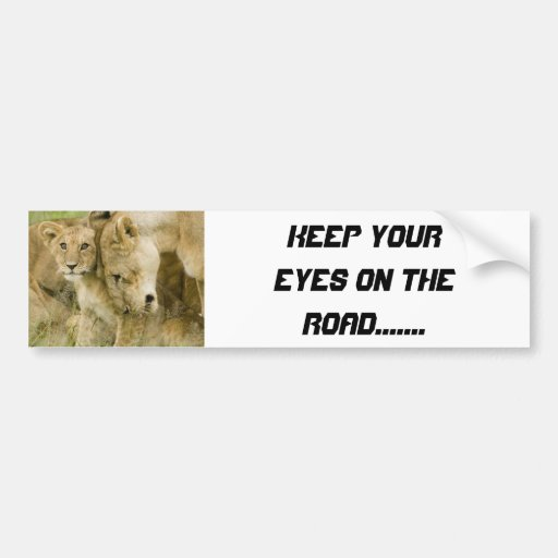 Lions Bumper Stickers