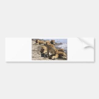 lions bumper stickers