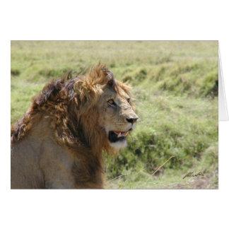 (Lions Clubs) Majestic Lion (Masai Mara, Kenya) Card