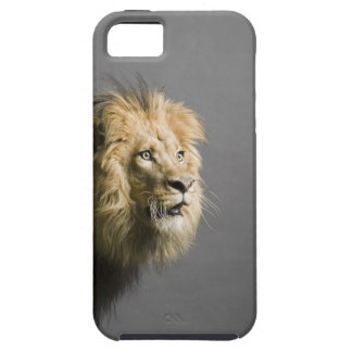 Lion's face iPhone 5 covers