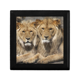 Lions Gift Box