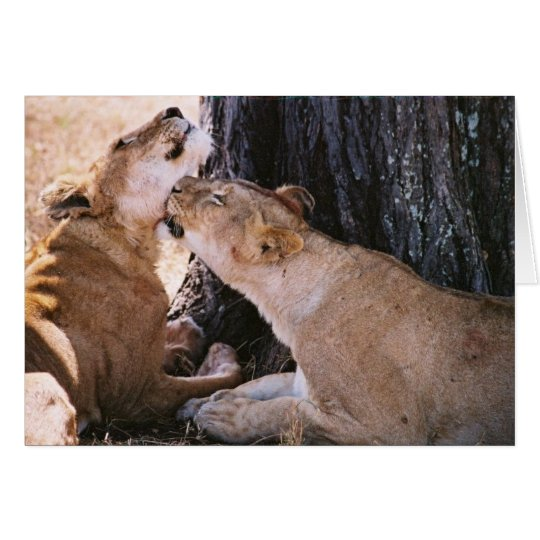 Lions in the Serengeti Card