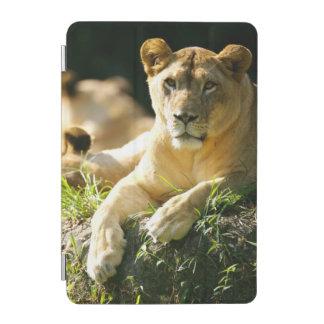 Lions iPad Mini Cover