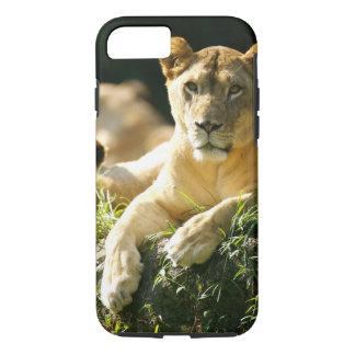 Lions iPhone 8/7 Case