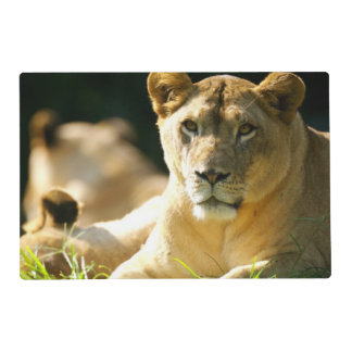 Lions Laminated Placemat