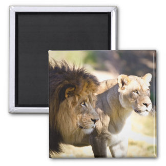 Lions Refrigerator Magnet