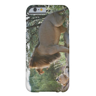 lions mating, Panthera leo, Kgalagadi Barely There iPhone 6 Case