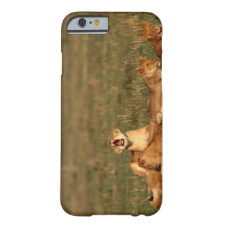 Lions on a savanna barely there iPhone 6 case
