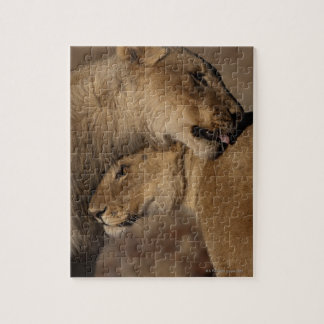 Lions (Panthera leo) pair bonding, Skeleton Jigsaw Puzzle
