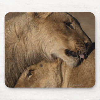 Lions (Panthera leo) pair bonding, Skeleton Mouse Pad