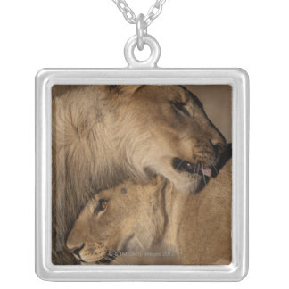 Lions (Panthera leo) pair bonding, Skeleton Silver Plated Necklace