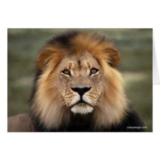 Lions Photograph Card