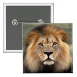 Lions Photograph Pin