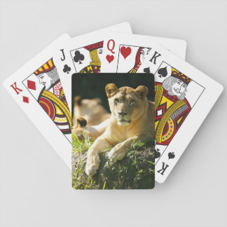 Lions Playing Cards