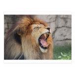 Lions Postcards