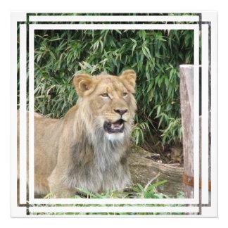 Lions Roar Invitation