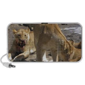lions portable speaker
