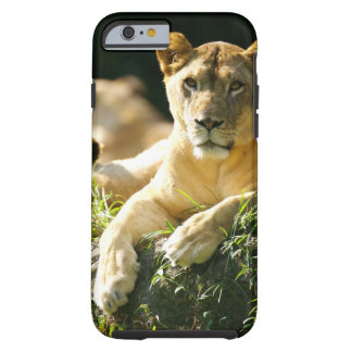 Lions Tough iPhone 6 Case