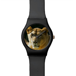 Lions Watch