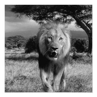 Lions Wildcat 13 Cm X 13 Cm Square Invitation Card