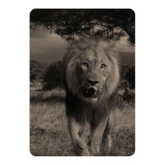 Lions Wildcat 13 Cm X 18 Cm Invitation Card