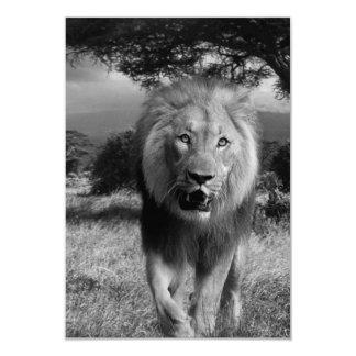 Lions Wildcat 9 Cm X 13 Cm Invitation Card