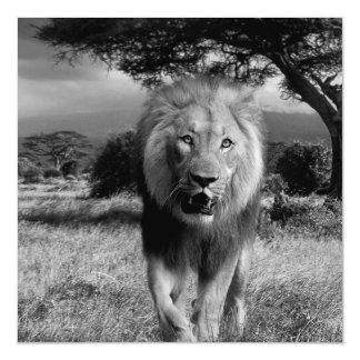 Lions Wildcat Magnetic Invitations