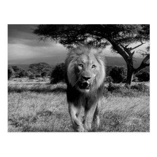 Lions Wildcat Postcard