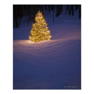 Lit Christmas tree outside Posters