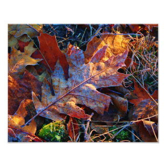 Lit Up Frosted Autumn Leaves Photo