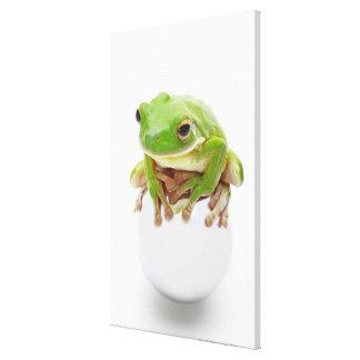 Litora Infrafrenata, Frog Canvas Print
