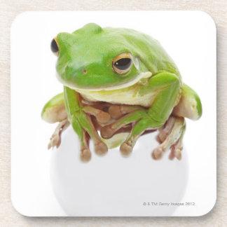 Litora Infrafrenata, Frog Drink Coaster