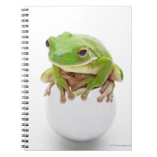 Litora Infrafrenata, Frog Notebooks