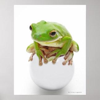 Litora Infrafrenata, Frog Poster