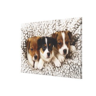 Litter of puppies canvas print