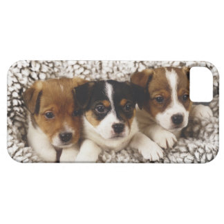 Litter of puppies iPhone 5 cover